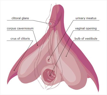 Vajina